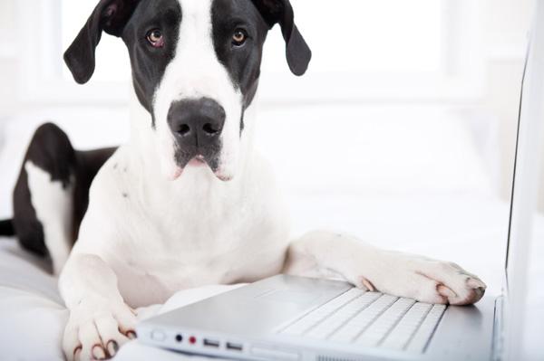 laptopdog
