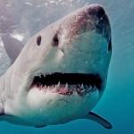 海の危険な生き物ベスト5