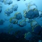 魚の群れが見たいならヒルトゥガンでダイビング!