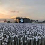 今セブで話題の「10000 Roses Café & More」デートにおすすめです!
