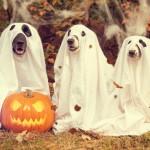 Halloweenの時に使える英会話フレーズ・英単語集